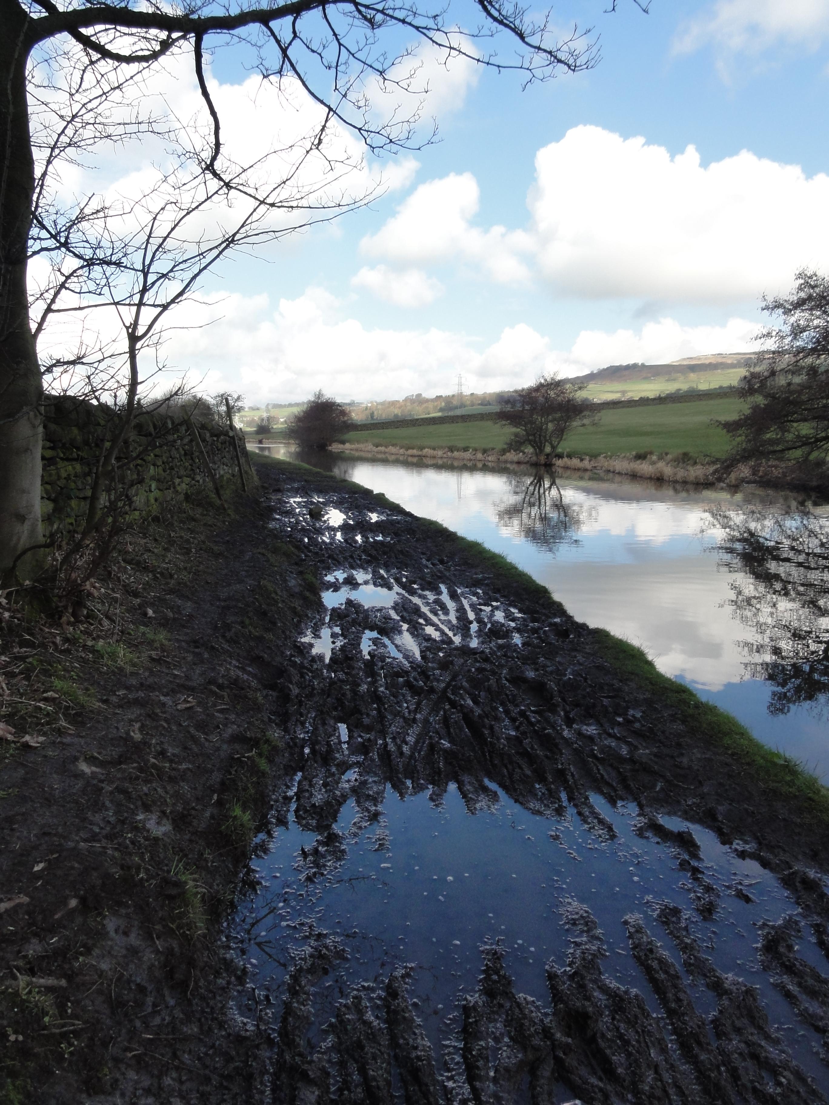 Swamp photo2